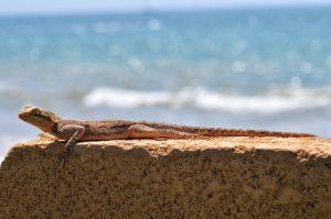 lizard-1334802_1920
